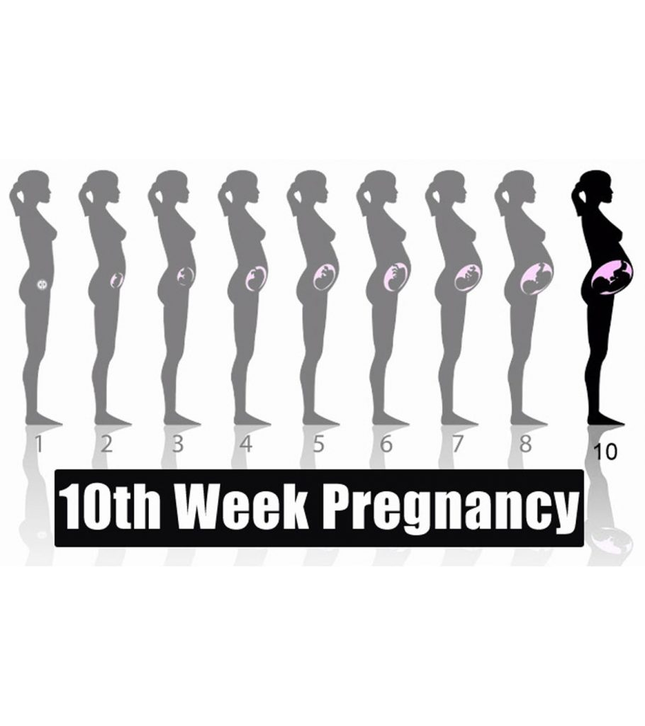 10th Week Pregnancy Symptoms Baby Development Tips And Body Changes