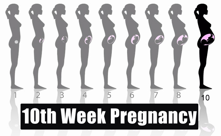10th Week Pregnancy