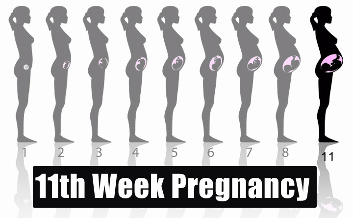 11th Week Pregnancy Symptoms Baby Development Tips And Body Changes