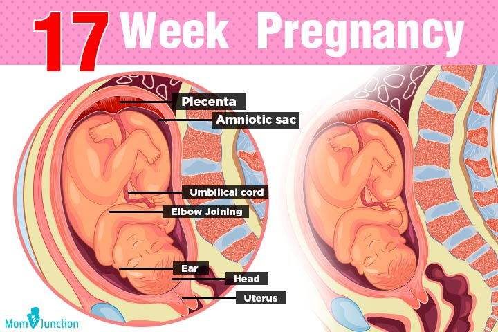 17th Week Pregnancy Symptoms Baby Development Tips And Body Changes