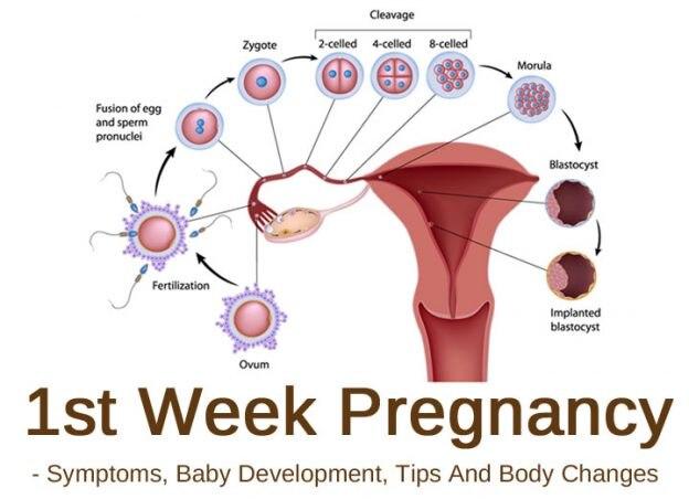 1st Week Pregnancy: Symptoms, Baby Development, Tips And ...