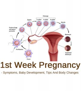 1st Week Pregnancy Symptoms, Baby Development, Tips And Body Changes