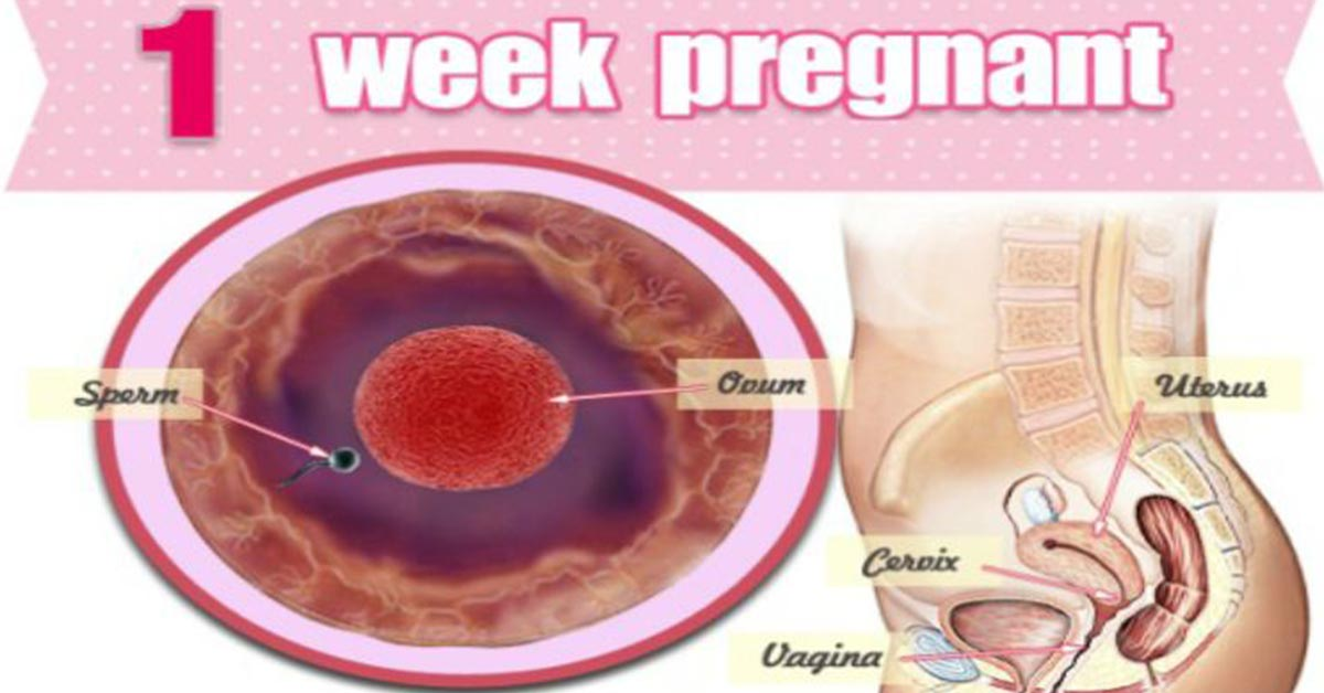 1st Week Pregnancy: Symptoms, Baby Development, Tips And Body Changes
