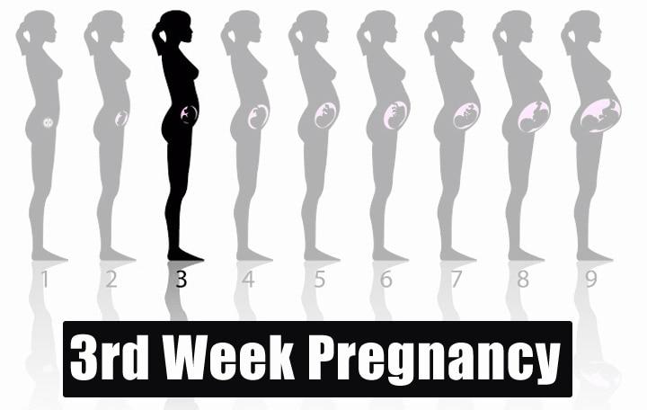 3rd Week Pregnancy
