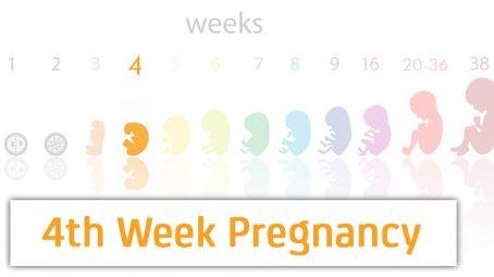 4th week pregnancy