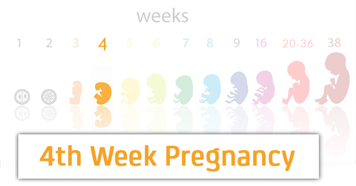 4 Weeks Pregnant Symptoms Baby Development Tips And Body Changes
