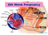 6th Week Pregnancy: Baby Development, Symptoms And Ultrasound