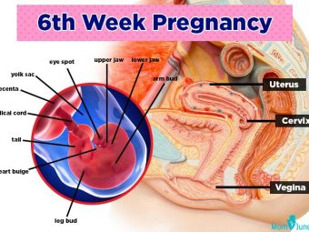 6th Week Pregnant: Symptoms, Baby Development And Body Changes