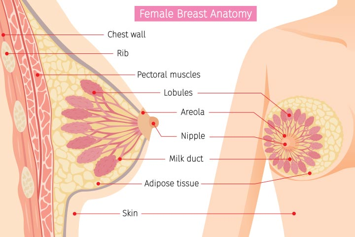Breast Pain In Pregnancy Types, Causes, And Ways To -3544