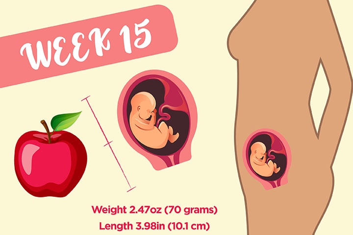 How Big Is Your Baby At 15 Weeks