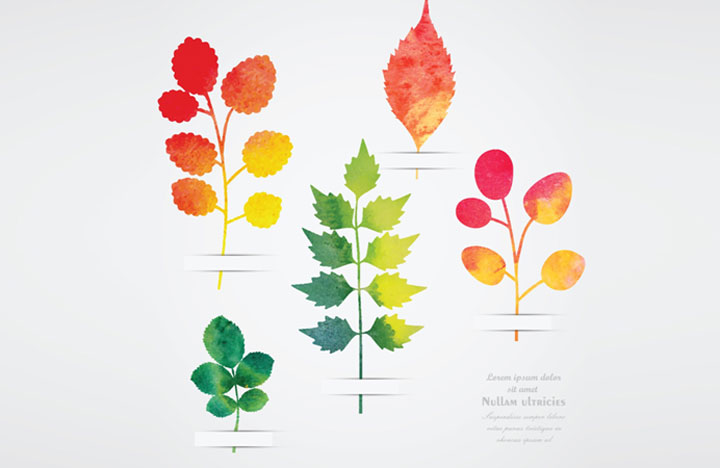 Leaf Impressions