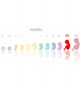 20th Week Pregnancy Symptoms, Baby Development And Bodily Changes