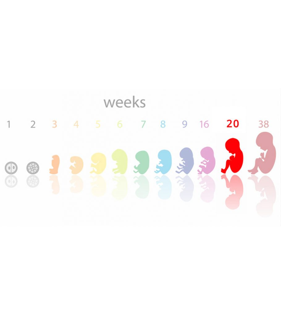 8 weeks pregnant symptoms at 8 Weeks