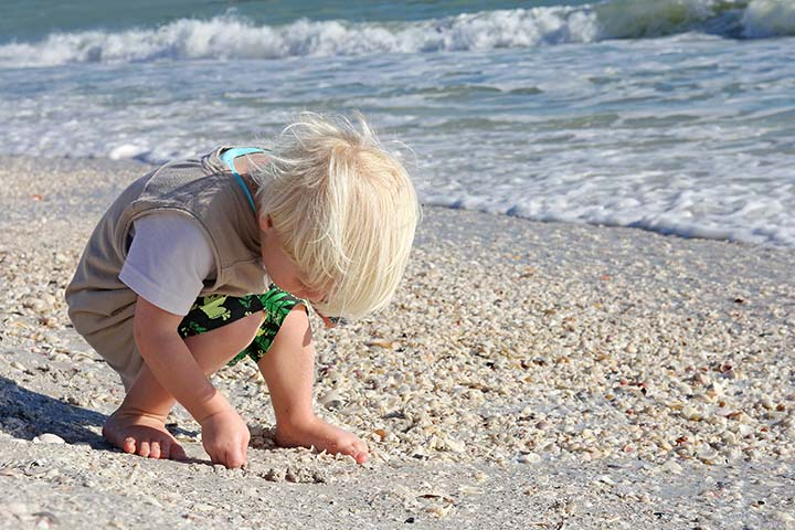 Collecting Seashells