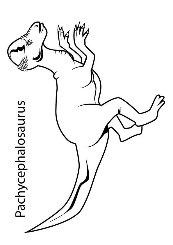 The-Pachycephalosaurus