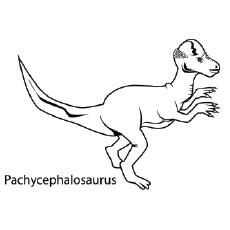 Pachycephalosaurus Coloring Pages Dinosaur To Color