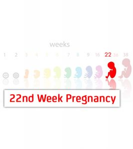 22nd Week Pregnancy Symptoms, Baby Development And Body Changes