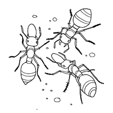 a printables ant coloring page