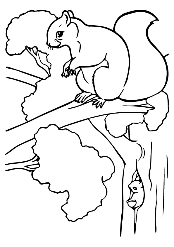 A-Squirrel-Coloring-Phot