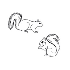 A-Squirrel-Coloring-ardilla