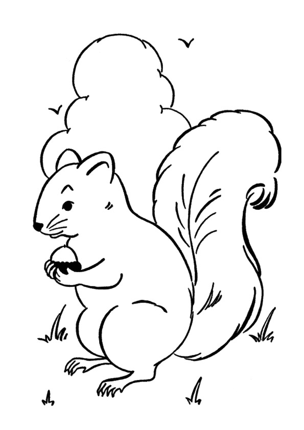 A-Squirrel-Coloring-sney