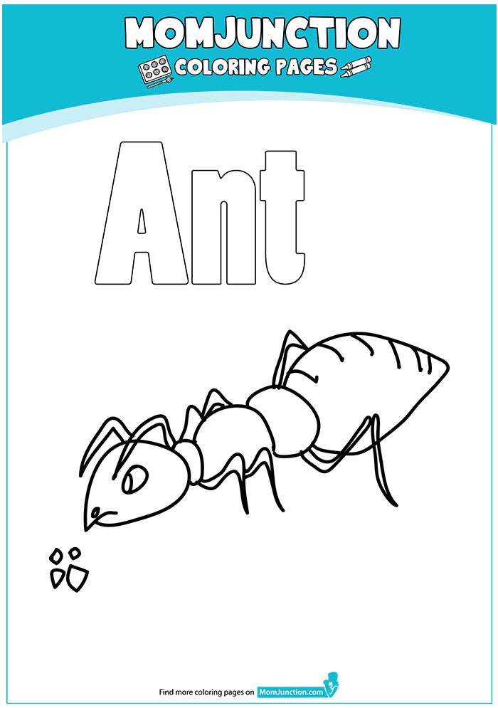 Ant-coloring-big-16