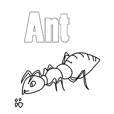 Ant-coloring-big-16