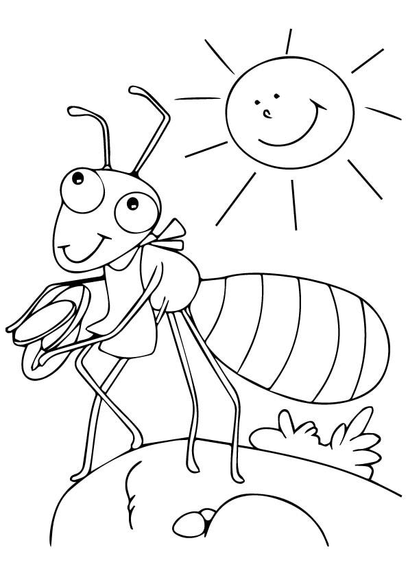 Ant-coloringsun