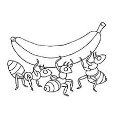 Ants-Coloring-banana