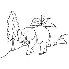 Elephant 17