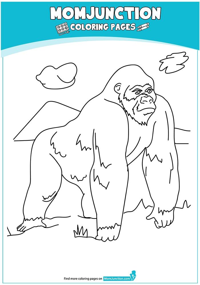 Gorilla-17