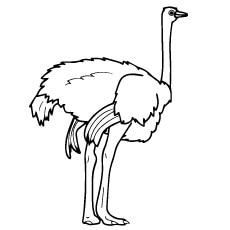 Ostrich-Strong-Feet
