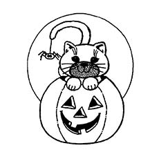 Scary-Halloween-small-Cat