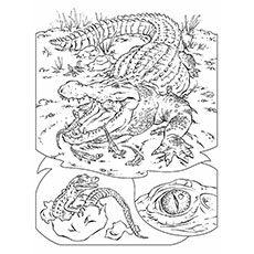 Wild Animal Croc to Color