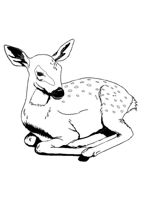 The-Deer