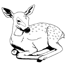 deer coloring pages to print - Printable Coloring Pages Of Animals