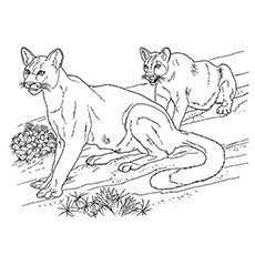 Wild Desert Animals Coloring Pages