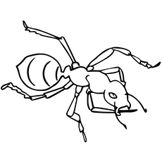 Top 25 Free Printable Ants Coloring Pages Online - ant coloring page for toddlers