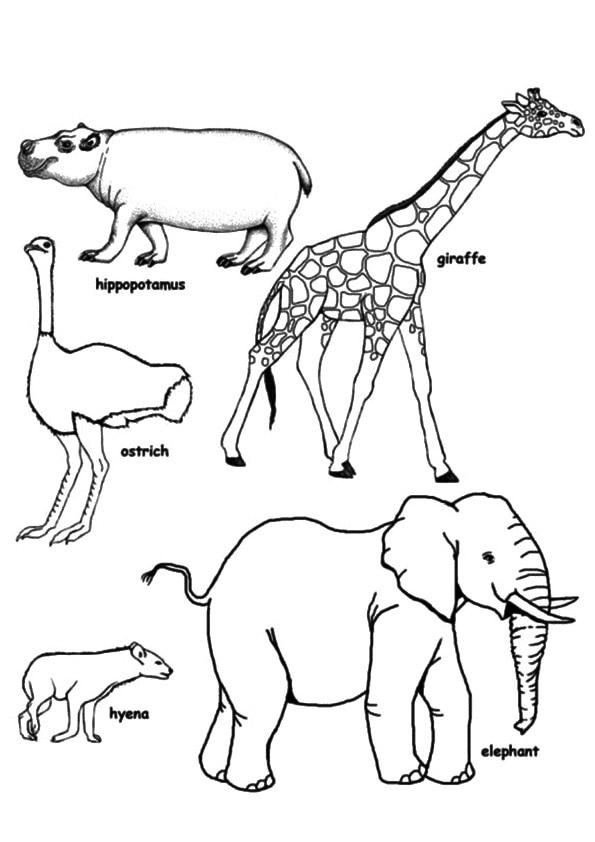 The-Giraffe-And-elephant