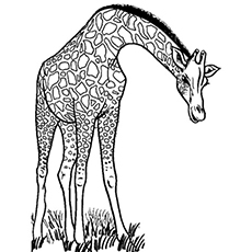 wild giraffe coloring pages