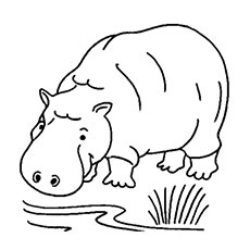 Jungle Animal Hippopotamus Coloring Pages