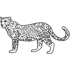 Wild Animal Leopard Coloring Pages