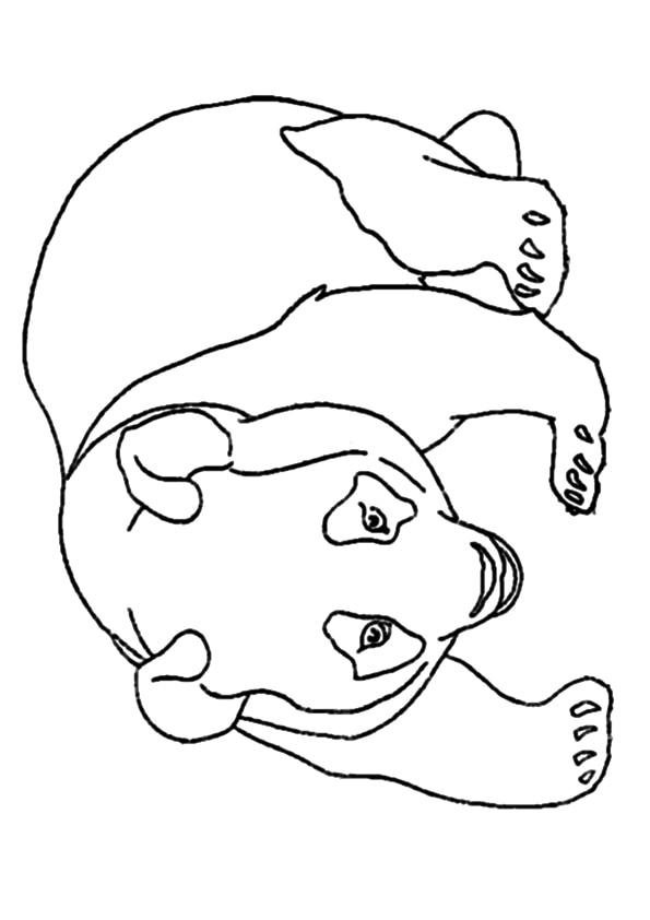 The-Panda-bear1