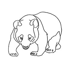 Wild Panda Bear Coloring Pages