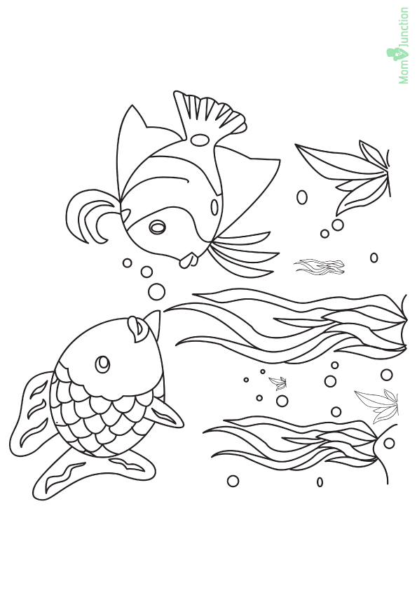 The-Tropical-Fishes-in-the-Ocean-16