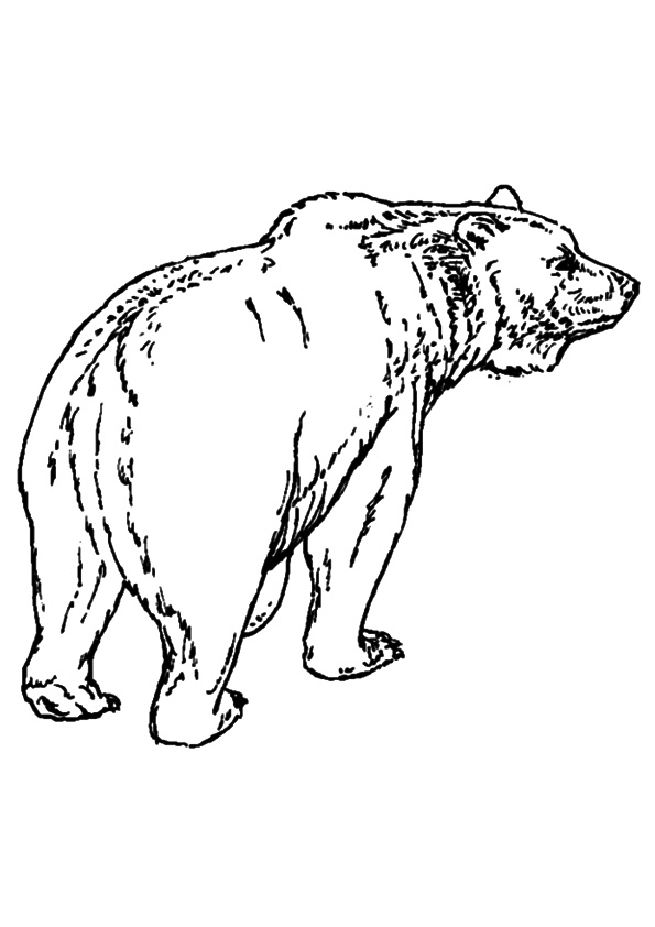 The-bear-walk