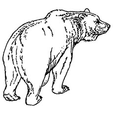 Bear Walking Coloring Pages