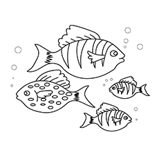 The-fishes-16