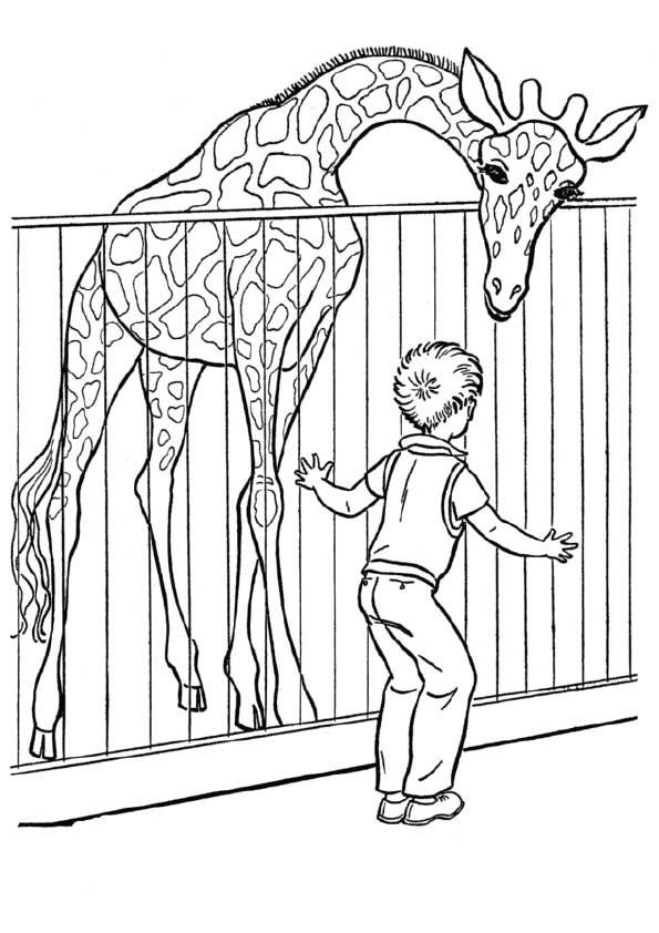 The-giraffe-in-the-zoo