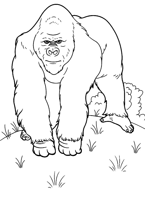 The-gorilla-Trekking
